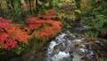 秋の花園渓谷 46157800