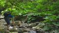 ハイキング 山歩き 女性の動画 46172143