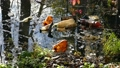 Floating Plastic bottles in a polluted pond water 46179175