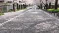 桜並木 花吹雪 46209768