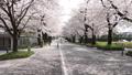 桜並木 46209769