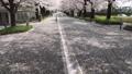 桜並木の坂道 46209772