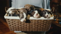 basket, puppy, pets 46224961