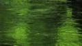 สายน้ำใส,ผิวน้ำ,ฤดูร้อน 46233346