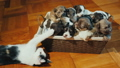 basket, puppies, dog 46247049