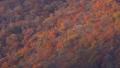 栃木県日光市 紅葉の山 土呂部 (11月) 左から右上へパン ゆっくり 46308984