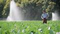 农业 农场 农民 46337136