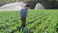 农业 农场 农民 46337138