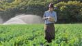农业 农场 农民 46337140