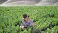 agriculture, farm, farmer 46337145