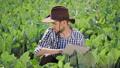 农业 农场 农民 46337146