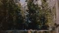 森林 フォトグラファー ハイキングの動画 46339492