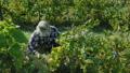 農民 農夫 工人 46371910