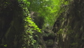 Green gorge in tropical forest with boulders and moss in the jungle natural mountain park 46381884