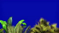 Tropical plant in the wind on blue screen. Beautiful summer looped background. 46383491