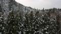 鳥瞰圖山後面冬天秋田縣雪場面森林 46385031