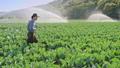 agriculture, farmer, farming 46414015