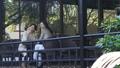 中間女性餐館多士旅行圖像 46415680