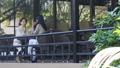 中間女性餐館多士旅行圖像 46415683