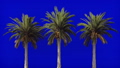 Palm trees in the wind on blue screen. Beautiful summer looped background. 46419724