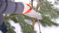 Close up of hand with saw cutting pine tree branches in winter snowy garden for Merry Christmas and 46427543