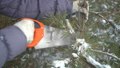 Close up of cutting pine tree branches by saw in winter snowy garden for Merry Christmas and Happy 46427547