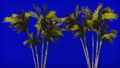 Palm trees in the wind on blue screen. Beautiful summer looped background. 46440459