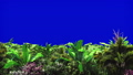 Tropical plants in the wind on blue screen. Beautiful summer looped background. 46441280