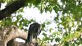 苍鹰捕食猎物 46455984