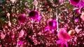 クリスマスツリーに飾られているオーナメント 46497396