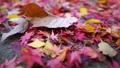 落葉很多地面 46561433