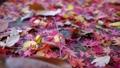 落葉很多地面 46561434