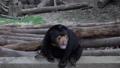 熊 動物 太陽 46563956