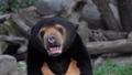 熊 動物 太陽 46563959