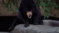 熊 動物 太陽 46563988