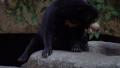 熊 動物 太陽 46564001