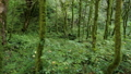 Camera moving inside the mysterious green forest. 46570856
