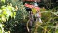 旅行秋天秋葉母親女兒父母和兒童家庭旅行圖像 46584774