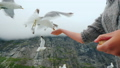 A spectacular video - a woman feeds a seagull from her hands, which flies against the backdrop of 46639451
