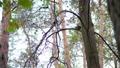 松鼠 动物 树木 46670891