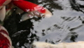 水族館 魚 游泳 46724445