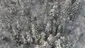 공중 촬영 아키타 현 겨울 풍경 설산 숲 46786393
