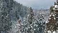 공중 촬영 아키타 현 겨울 풍경 설산 숲 46786504