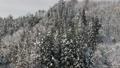 공중 촬영 아키타 현 겨울 풍경 설산 숲 46786506
