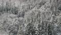 공중 촬영 아키타 현 겨울 풍경 설산 숲 46786512