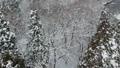공중 촬영 아키타 현 겨울 풍경 설산 숲 46786514