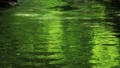clear stream, water current, river surface 46788425