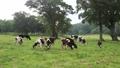 kayanodaira, meadow, ranch 46788428