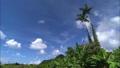 papaya_Juice_Vol_1_029 46794411