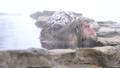 非常喜歡溫泉的洗澡的Jigokudanino猴子公園的日本猴子(雪猴) 46832864